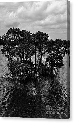 Mangrove Island Canvas Print by Andres LaBrada