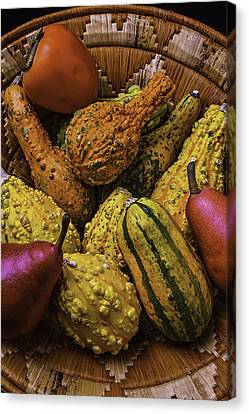 Many Colorful Gourds Canvas Print