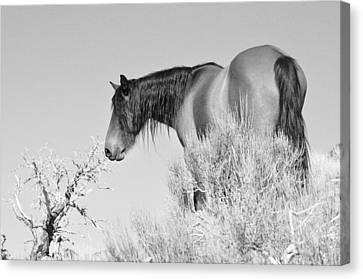Wild Horse Canvas Print - Mare Up High by Lula Adams