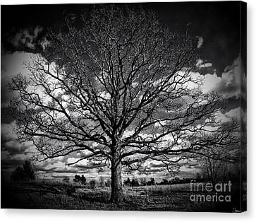 Marion Oaks Canvas Print by September  Stone