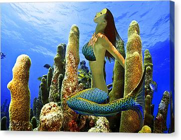 Canvas Print featuring the photograph Masked Mermaid by Paula Porterfield-Izzo
