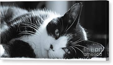 Max The Cat Canvas Print by David Warrington