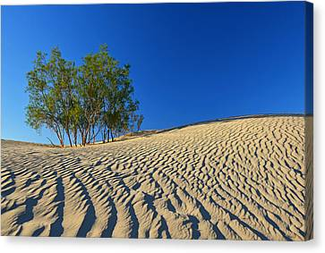 Canvas Print featuring the photograph Mesquite Flat Sand Dunes - Death Valley by Dana Sohr