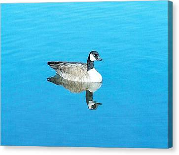 Canvas Print featuring the photograph Mirror Goose by Kerri Mortenson