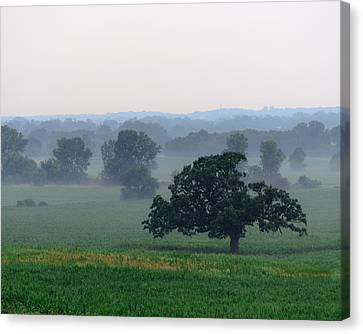 Misty Oak Canvas Print by Randy Scherkenbach