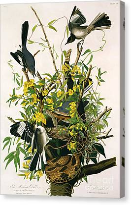 Mocking Birds And Rattlesnake Canvas Print by John James Audubon