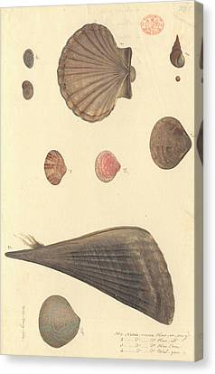 Algal Canvas Print - Molluscs by Natural History Museum, London