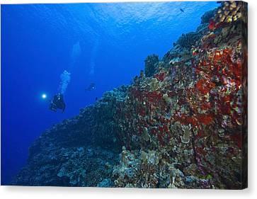 Molokini Maui Hawaii Usa Scuba Diver Canvas Print by Stuart Westmorland