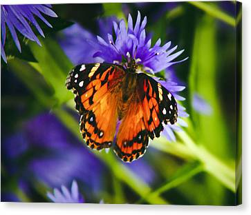 Monarch And Flower Canvas Print by Debra Crank