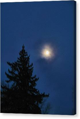 Moon Beyond The Spruce Canvas Print
