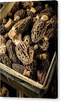 Morel Canvas Print - Morel Mushrooms by Aberration Films Ltd