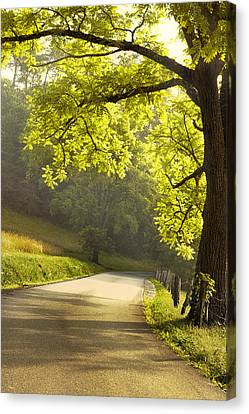 Morning Drive Canvas Print by Andrew Soundarajan