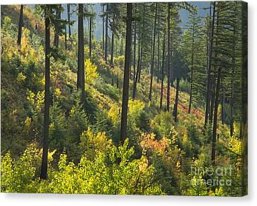 Morning Light Canvas Print by Idaho Scenic Images Linda Lantzy