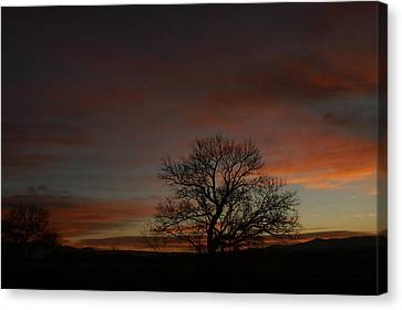 Morning Sky In Bosque Canvas Print by James Gay