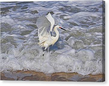 Morning Stretch  Canvas Print by George Bostian