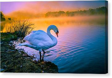 Morning Swim Canvas Print by Brian Stevens