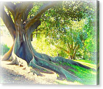 Morton Bay Fig Tree Canvas Print