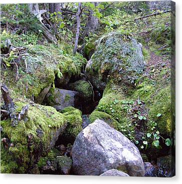 Moss Covered Creek Canvas Print