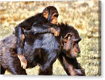 Chimpanzee Canvas Print - Mother Chimpanzee With Baby On Her Back by George Atsametakis