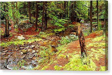 Mountain Stream With Hemlock Tree Stump Canvas Print