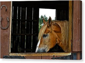 Mr Ed Canvas Print by Frozen in Time Fine Art Photography