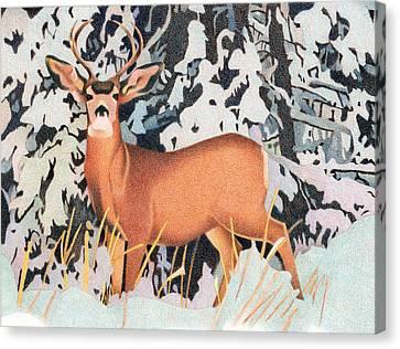 Mule Deer Canvas Print by Dan Miller