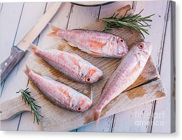 Mullet Fish And Rosemary  Canvas Print by Viktor Pravdica