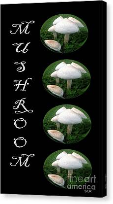 Mushroom Art Collection 1 By Saribelle Rodriguez Canvas Print by Saribelle Rodriguez