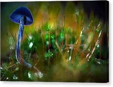 Mushroom Magic Canvas Print by Dirk Ercken