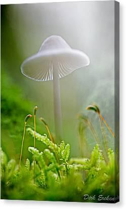 Mushroom Mycena Galericulata Canvas Print by Dirk Ercken