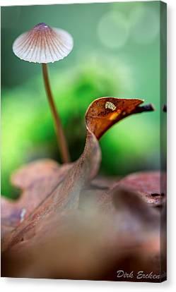 Mushroom Mycena Sp. Canvas Print by Dirk Ercken