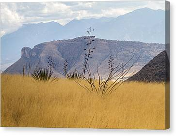 Mustang View Canvas Print by Beverly Parks
