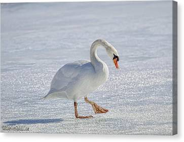 Mute Swan On St Clair River Canvas Print by LeeAnn McLaneGoetz McLaneGoetzStudioLLCcom