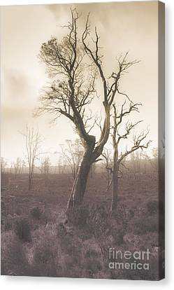 Mystery Tree In A Dark Scary Forest Canvas Print by Jorgo Photography - Wall Art Gallery