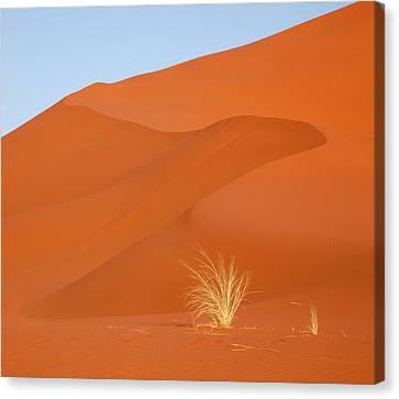 Namibia, Namib-naukluft Park Canvas Print by Jaynes Gallery