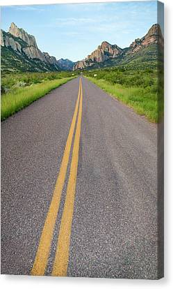 Portal Canvas Print - National Forest Road by Larry Ditto