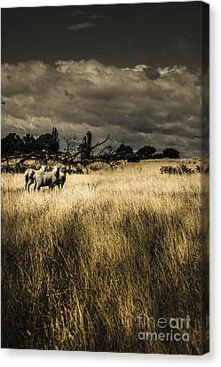 Dry Land Canvas Print - Nature Photo Of Tasmanian Countryside In Australia by Jorgo Photography - Wall Art Gallery