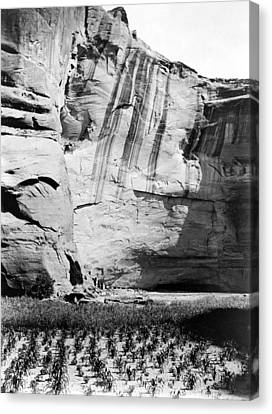 Navajo Corn Fields, C1906 Canvas Print