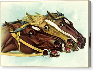Neck And Neck Canvas Print by Gary Grayson