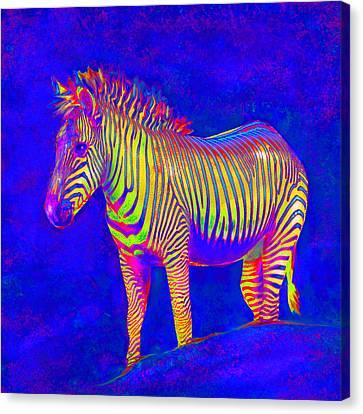Neon Zebra 2 Canvas Print by Jane Schnetlage