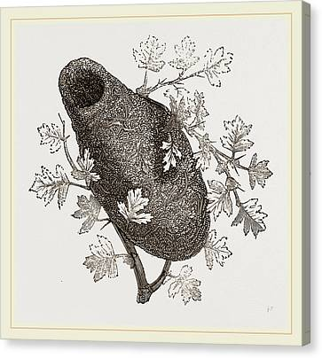 Nest Of Long Tailed Titmouse Canvas Print by Litz Collection