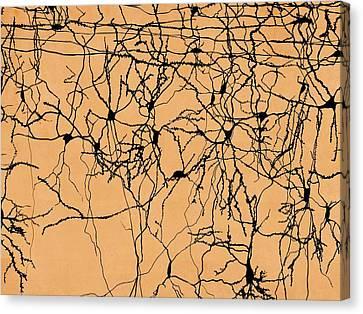 Neuron Network Canvas Print by Juan Gaertner