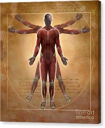 New Vitruvian Man Canvas Print by Jim Dowdalls