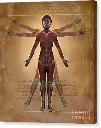 New Vitruvian Woman Canvas Print by Jim Dowdalls