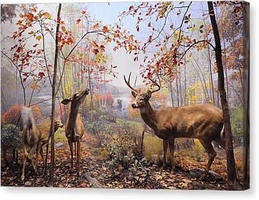 New York City American Museum Of Natural History Collection Canvas Print