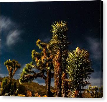 Night Desert Canvas Print by Angela J Wright