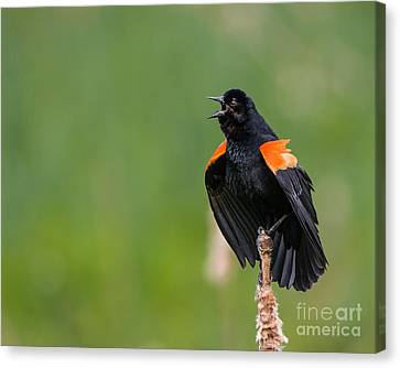 Canvas Print featuring the photograph Noisemaker by Dale Nelson