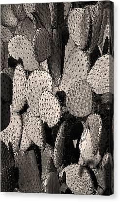 Nopales Cacti Canvas Print by Martin Alfaro