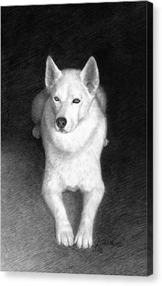 Huskies Canvas Print - Nykia by Joe Olivares