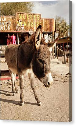Oatman, Arizona, United States Canvas Print by Julien Mcroberts